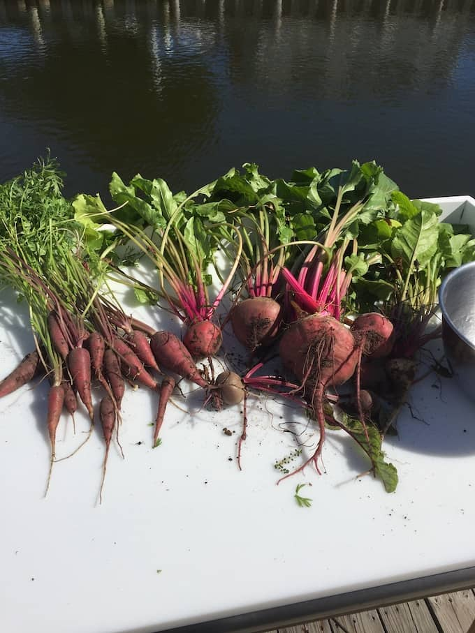 beets, carrots, and beet tops from the garden